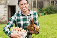 Jong boer hou hoender en mandjie eiers.