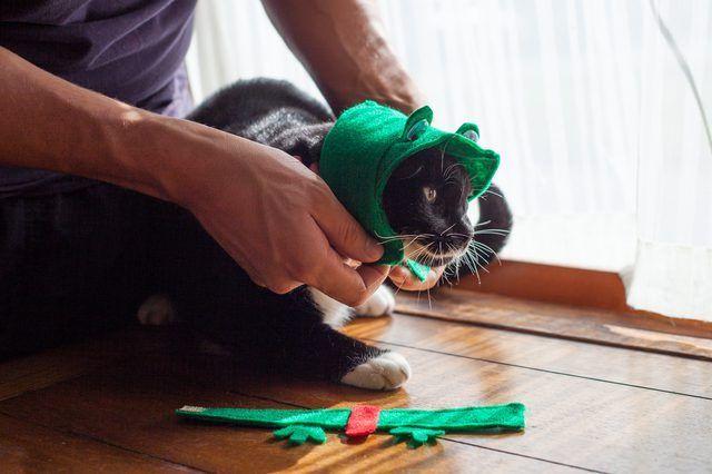 Hoe om `n Padda kostuum vir Cats