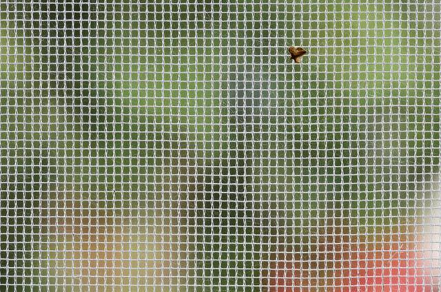 `N Makro close-up van `n klein vlieg op `n venster skerm.