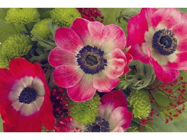 Hierdie blom kom in verskillende kleure.
