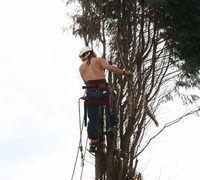 Boom chirurge kan siek bome herstel vir die gesondheid.