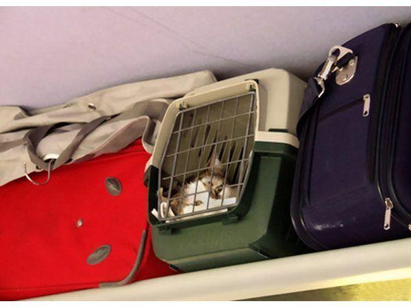 Troeteldiere wat voldoen aan spesifieke voorwaardes toegelaat mag word as dra-op items.