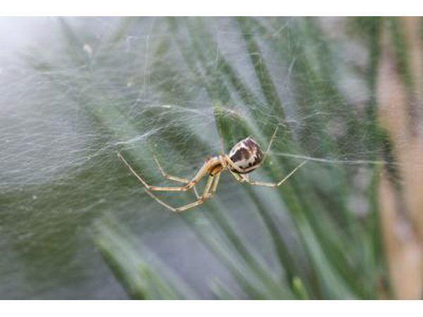vel web wewer