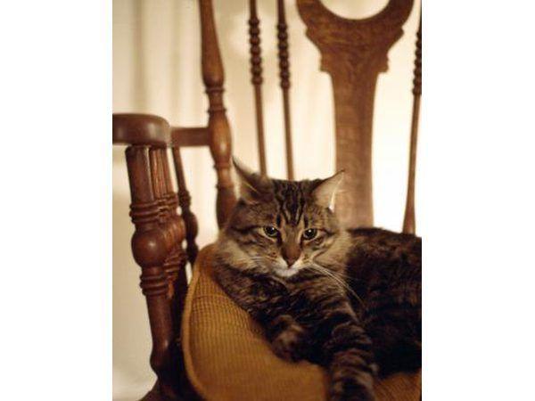 Kat op stoel